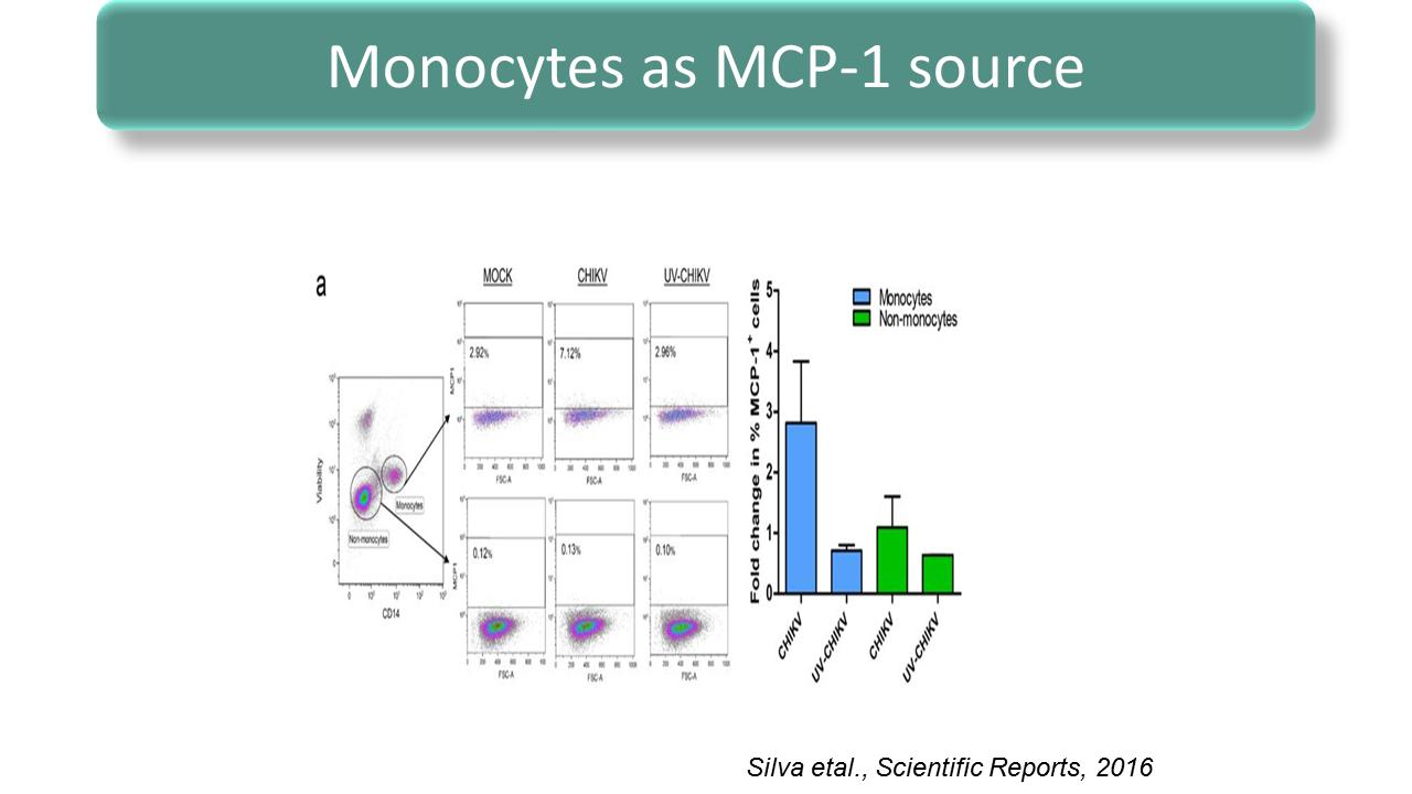 ImmunoKenya2018_Chikungunya_Slide9