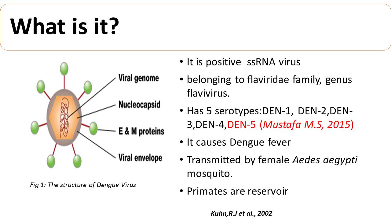 ImmunoKenya2018_Dengue_Slide2