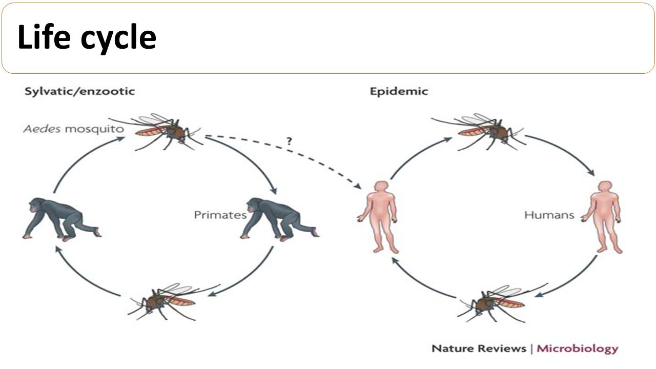 ImmunoKenya2018_Dengue_Slide5