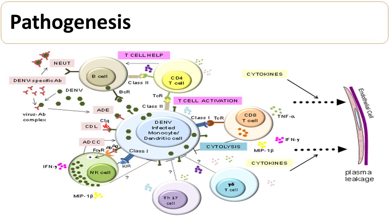 ImmunoKenya2018_Dengue_Slide6