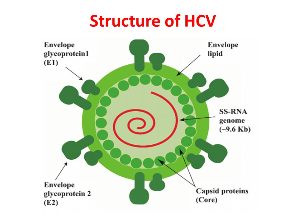 ImmunoKenya2018_HCV_Slide4